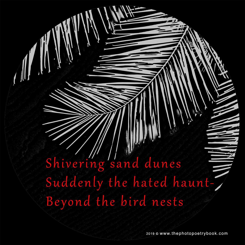 A Photohaiku - Haiku 4 - Sand Dunes